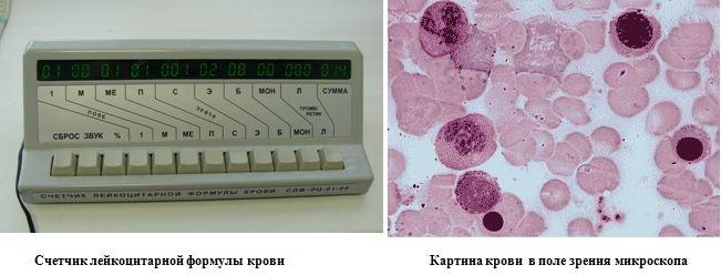 специализацией магазина методика ручной подсчет лейкоцитов страницу пользователя, чтобы